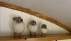 shepherds hut East Sussex